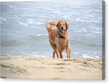 Proof That Dogs Smile Canvas Print