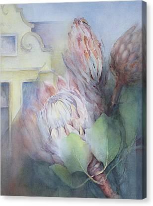 Protea At Stellenbosch Canvas Print by Karen Armitage