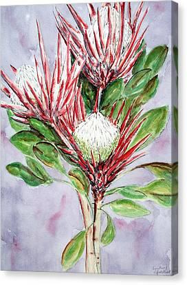 Proteas Canvas Print by Lyndsey Hatchwell