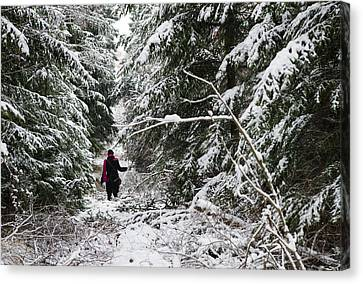 Protective Forest In Winter With Snow Covered Conifer Trees Canvas Print by Matthias Hauser