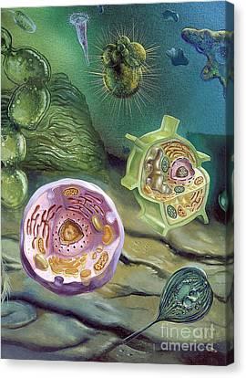 Proterozoic Era Canvas Print by Publiphoto