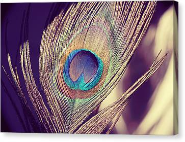 Proud As A Peacock Canvas Print by Nastasia Cook