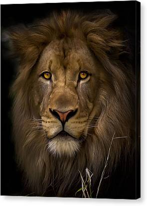 Proud Canvas Print by Cheri McEachin