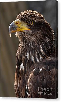 Proud Look Canvas Print by Simona Ghidini