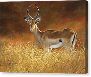 Proud Male Canvas Print