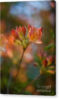 Proud Orange Blossoms Canvas Print by Mike Reid