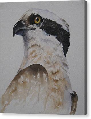Canvas Print featuring the painting Proud Osprey by Mary McCullah