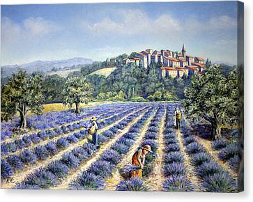 Provencal Harvest Canvas Print