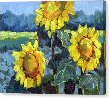 Provence Sunflower Trio Canvas Print by Diane McClary