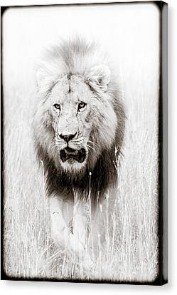 Canvas Print featuring the photograph Prowling For Prey by Mike Gaudaur