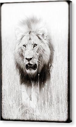 Prowling For Prey Canvas Print by Mike Gaudaur