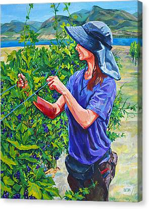 Pruning The Pinot Canvas Print by Derrick Higgins