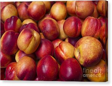 Canvas Print featuring the photograph Prunus Domestica by Mohamed Elkhamisy