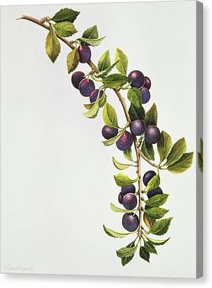 Prunus Insititia Canvas Print