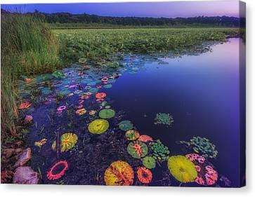 Psychedelic Shore - Great Meadows Nwr Canvas Print by Sylvia J Zarco