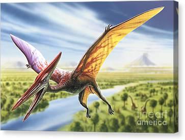 Pterodactyl Canvas Print