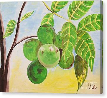 ptg  Guineps Canvas Print by Judy Via-Wolff