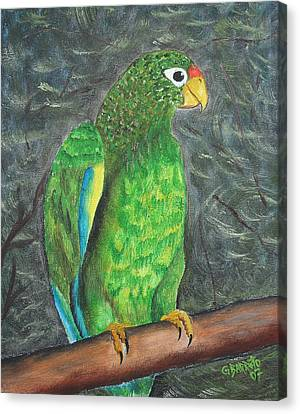 Puerto Rican Parrot Canvas Print by Gloria E Barreto-Rodriguez