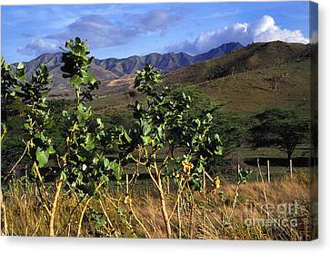 Puerto Rico Cayey Mountains Near Salinas Canvas Print by Thomas R Fletcher