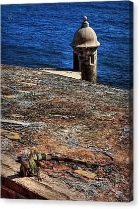 Castillo San Felipe Canvas Print - Puerto Rico Iguana 004 by Lance Vaughn