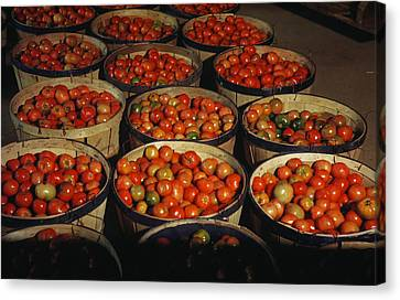 Puerto Rico Tomatoes Canvas Print by Granger