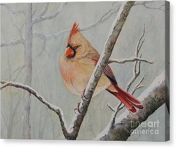 Puffed Up For Winters Wind Canvas Print