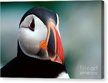 Canvas Print featuring the photograph Puffin Head Shot by Jerry Fornarotto