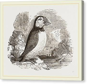 Puffin Canvas Print by Litz Collection