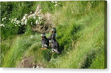 Puffin Meeting Canvas Print by George Leask
