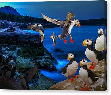 Puffins Bedding Down Canvas Print