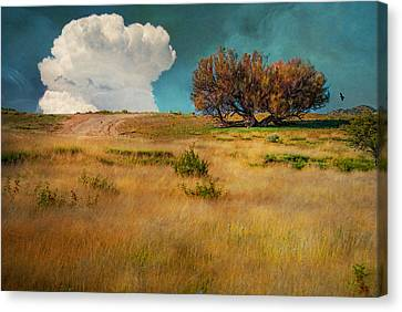 Puffy Cloud Canvas Print by Carolyn Dalessandro