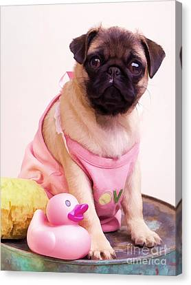 Pug Puppy Bath Time Canvas Print by Edward Fielding