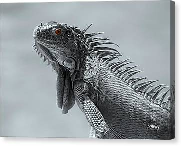 Canvas Print featuring the photograph Pugnacious by Patrick Witz