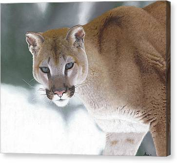 Puma In The Snow Canvas Print by Alina Kaplanov