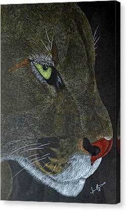 Puma Canvas Print by Jamie Nickels