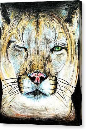 Puma Winking Eye Canvas Print by Daniel Janda