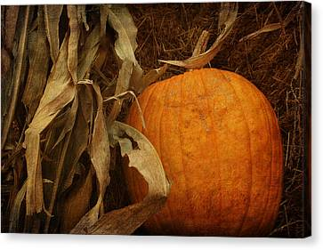 Pumpkin And Cornstalks Canvas Print