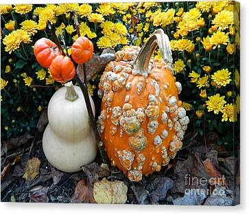 Pumpkin And Squash Canvas Print by Emmy Marie Vickers