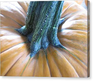 Canvas Print featuring the photograph Pumpkin by Beth Vincent