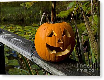 Pumpkin By The Pond Canvas Print