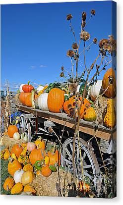 Pumpkin Farm Canvas Print by Minnie Lippiatt