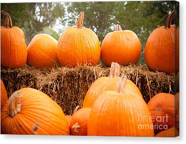 Pumpkin Fest Canvas Print by Sonja Quintero