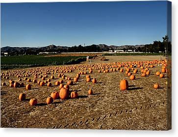 Canvas Print featuring the photograph Pumpkin Field by Michael Gordon