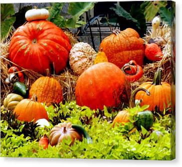 Pumpkin Harvest Canvas Print by Karen Wiles