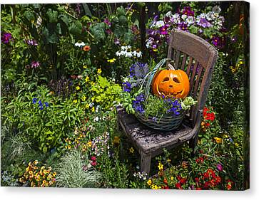 Pumpkin In Basket On Chair Canvas Print by Garry Gay