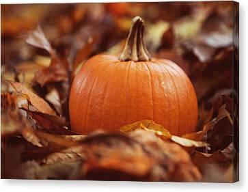 Pumpkin In Leaves Canvas Print