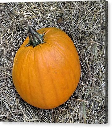 Pumpkin In The Hay Canvas Print by Patricia E Sundik