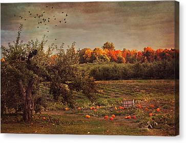 Harvest Canvas Print - Pumpkin Patch In Autumn by Joann Vitali