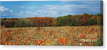 Pumpkin Patch - Panorama Canvas Print by Gena Weiser