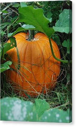Canvas Print featuring the photograph Pumpkin Patch by Ramona Whiteaker